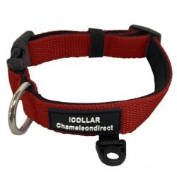 Dog Collar - pawsandtails.pet