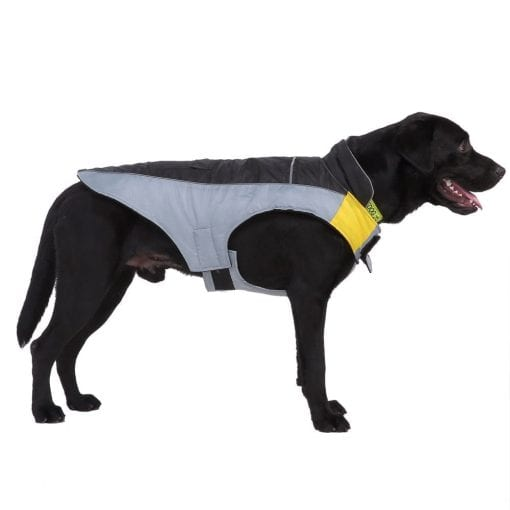 Black & Grey Coat - pawsandtails.pet