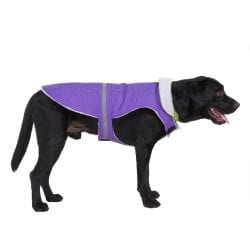 Purple Coat - pawsandtails.pet
