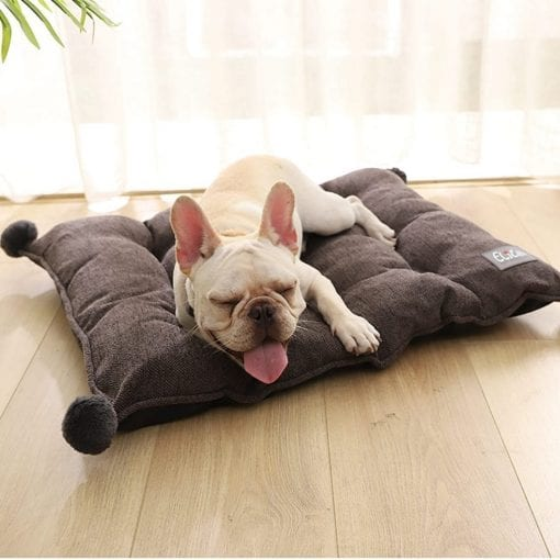 Brown Cushion - pawsandtails.pet