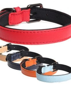Leather Collar With Neoprene Inner - pawsandtails.pet